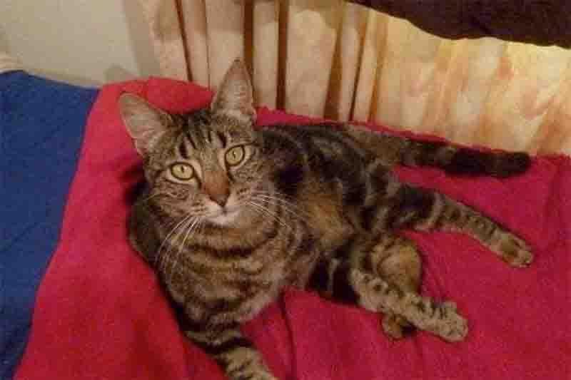 Gato é baleado e morto na frente de seu tutor