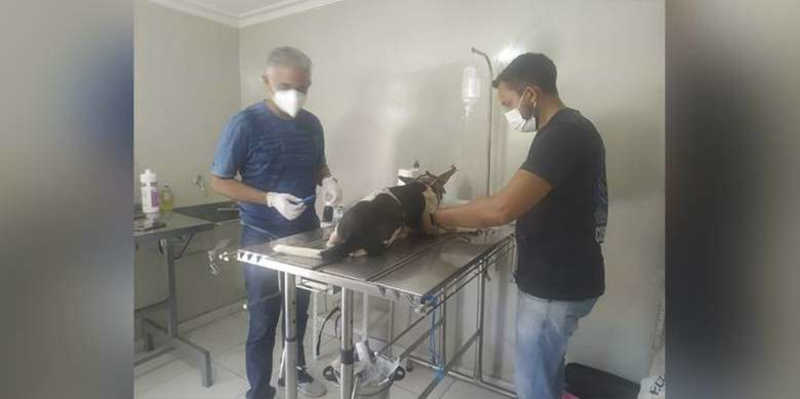 Cão é resgatado após denúncia de abuso sexual e maus-tratos em Conceição do Araguaia, PA