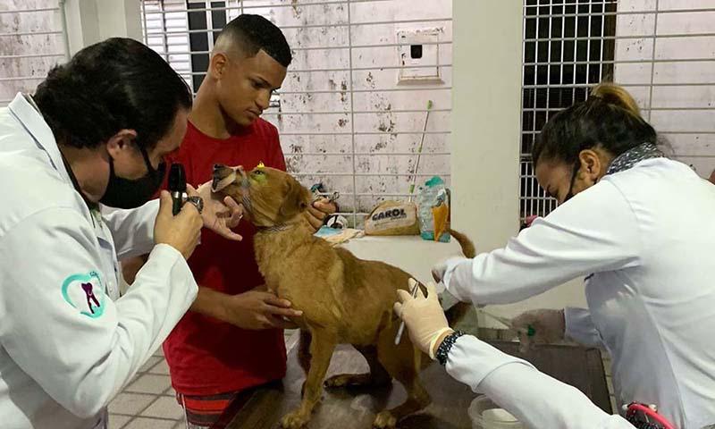 Os 18 cães passaram por exames veterinários