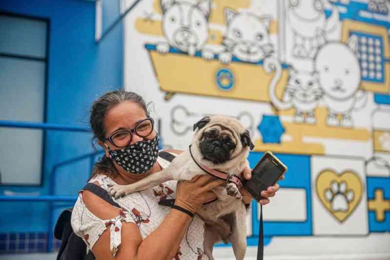 Hospital Veterinário do Recife (PE) abre mil vagas para castrações gratuitas de cães e gatos