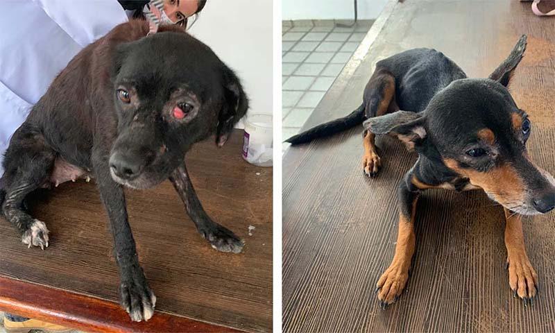 Vítimas de abandono e maus-tratos, 18 cães são resgatados em Camaragibe, PE