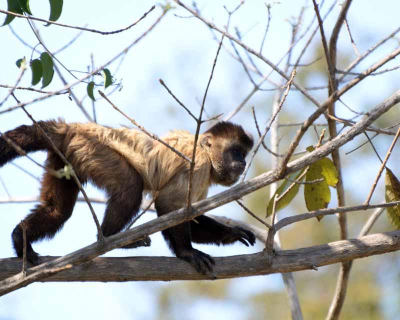 Justiça suspende transferência de animais do Zoobotânico de Teresina, PI