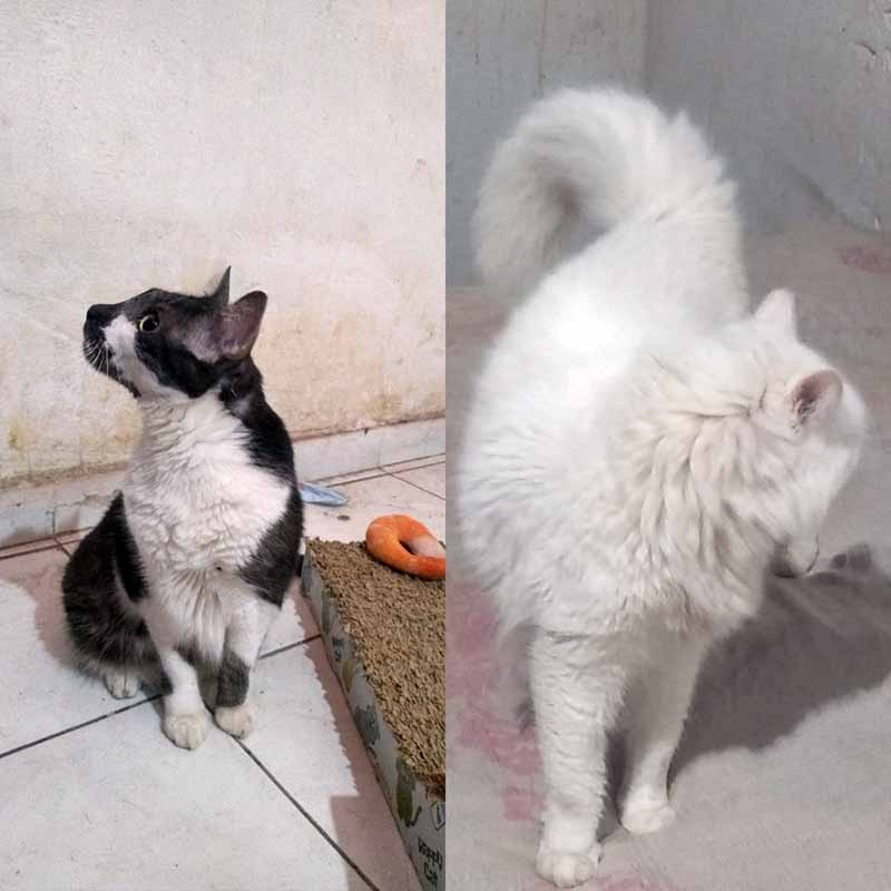 Gatos foram resgatados após serem abandonados na Zona Sudeste de Teresina — Foto: Arquivo Pessoal
