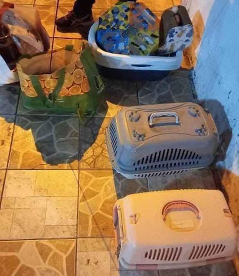 Gatos são abandonados com caminhas e brinquedos próximo a delegacia em Teresina — Foto: Arquivo pessoal