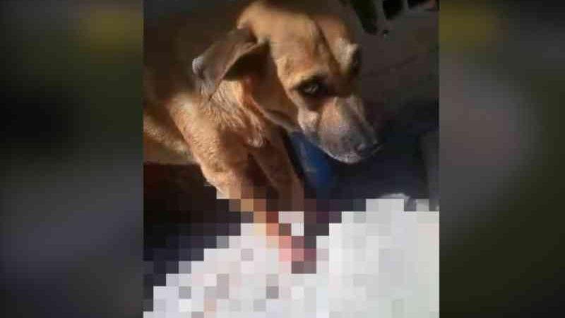 Cachorro esfaqueado por homem na Zona Sudeste de Teresina. — Foto: Arquivo Pessoal