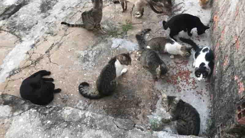 Protetores de animais cuidam de animais abandonados no Centro Administrativo. Foto: Divulgação /Polícia Civil do Piauí