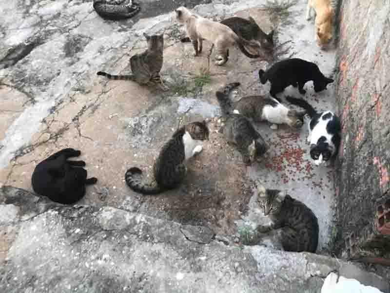 Gatos são encontrados mortos no Centro Administrativo, em Teresina (PI), e polícia suspeita de envenenamento