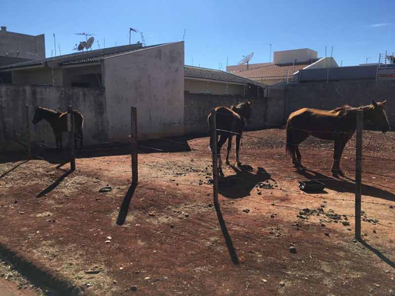 Guarda Municipal de Arapongas (PR) flagra maus-tratos contra cavalos