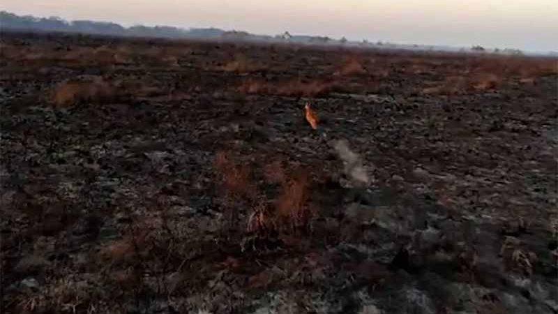 Incêndio atinge o Parque Nacional de Ilha Grande desde a semana passada - Foto: Divulgação/PF Guaíra
