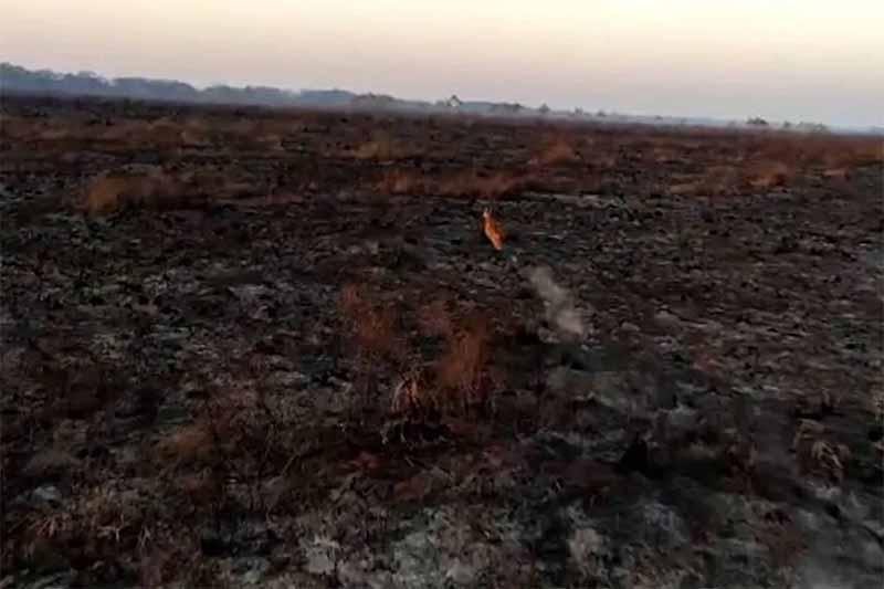 Caçadores aproveitam incêndio em parque no Paraná para abater animais