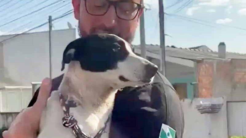 O delegado Matheus Laiola com o cão resgatado em São José dos Pinhais. Foto: Reprodução Instagram.