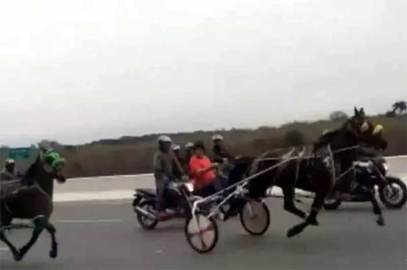 Polícia quer saber que corrida de cavalos era aquela em Piraquara, PR; vídeo viralizou