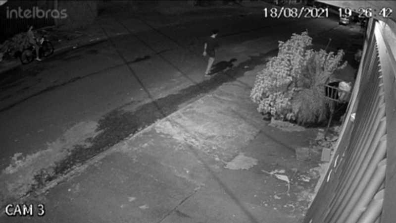 Câmeras de segurança flagram momento que mulher teria abandonado cãozinho no bairro Tarumã, em Cascavel, PR
