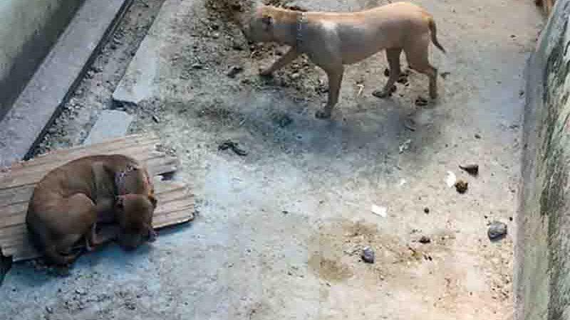 Animais foram encontrados em um espaço insalubre e muito magros. Foto: PM/Divulgação