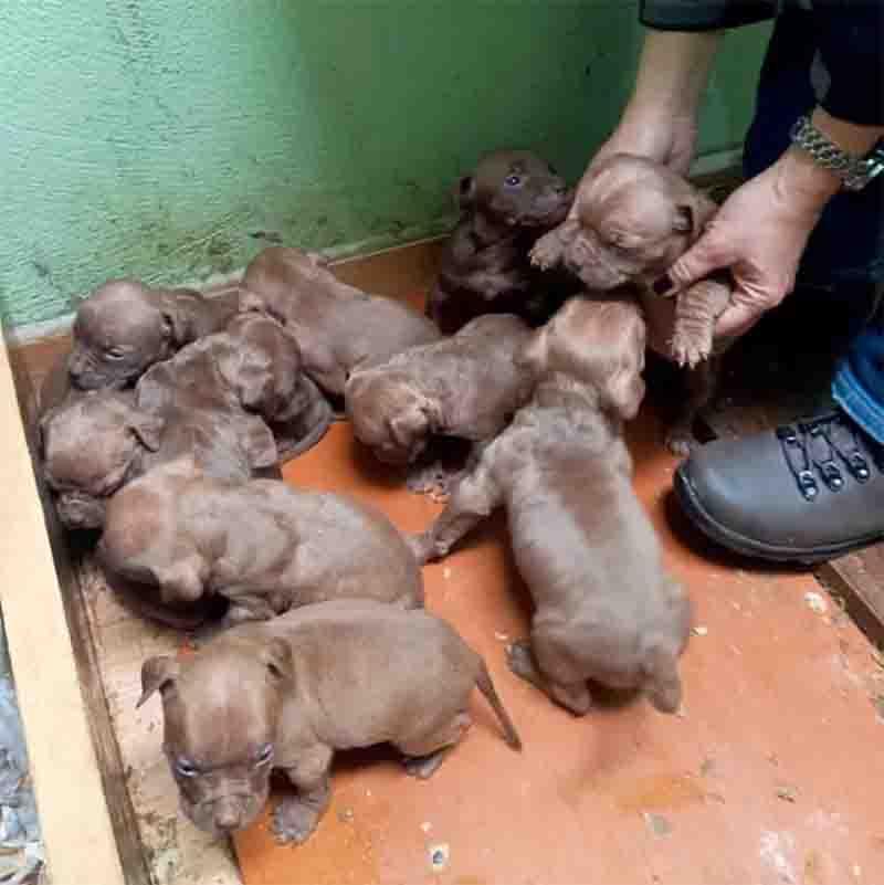 Dez filhotes estavam em um espaço improvisado e foram encontrados passando frio. Foto: PM/Divulgação