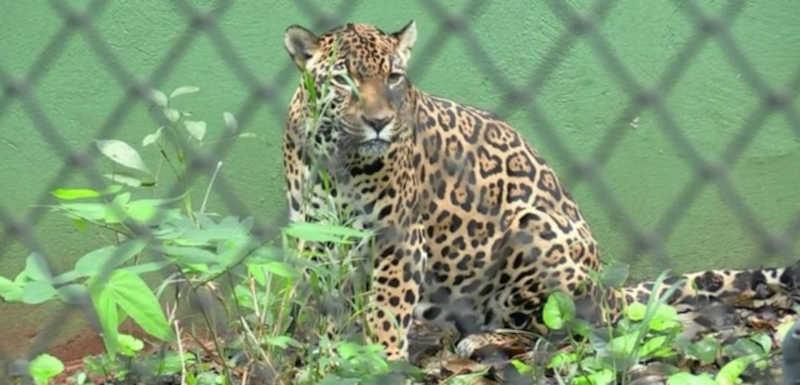 Zoológico de Foz do Iguaçu será fechado por não oferecer conforto acústico e visual aos animais — Foto: William Brisida/RPC