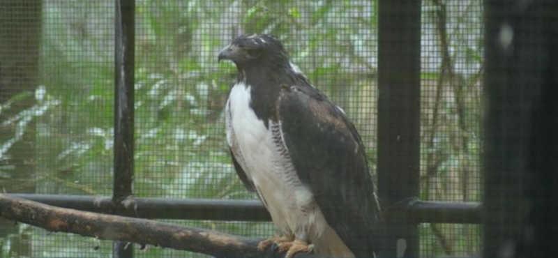 Quase 150 animais precisarão ser transferidos do zoológico de Foz do Iguaçu — Foto: William Brisida/RPC