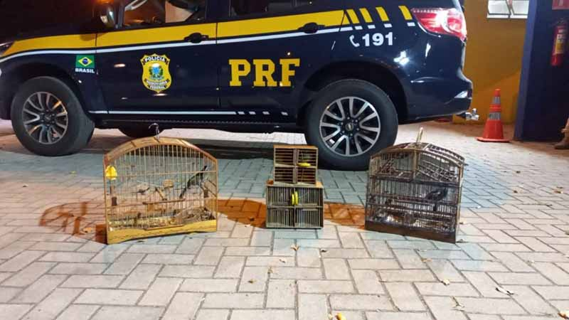PRF flagra homens transportando animais silvestres na BR-393, no RJ