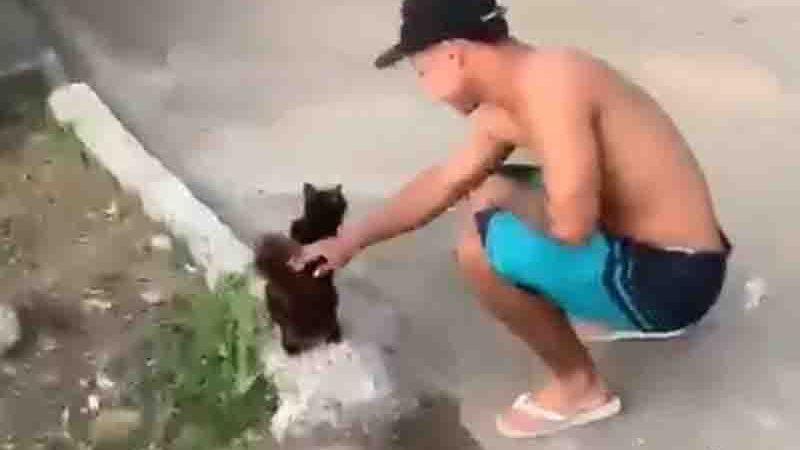 Crueldade: homem joga gato de barranco de 30 metros e o animal morre com os olhos furados; vídeo