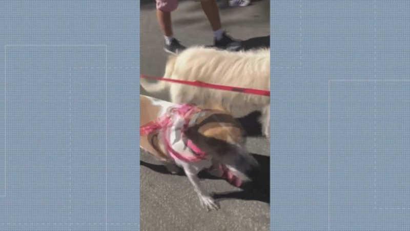 Moradores do Grajaú, na Zona Norte do Rio, protestaram no domingo (8) contra o envenenamento de cães — Foto: Reprodução/ TV Globo