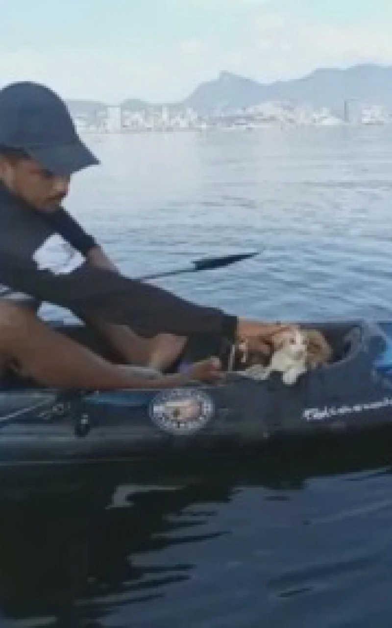 Pescadores resgatam gato que foi jogado da ponte Rio-Niterói
