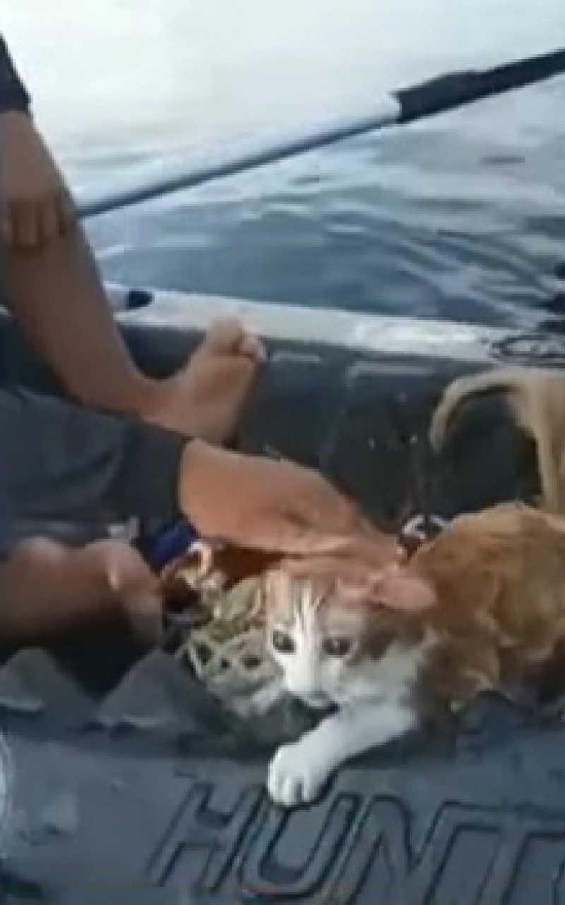 Gato é resgatado por pescadores na Baía de Guanabara