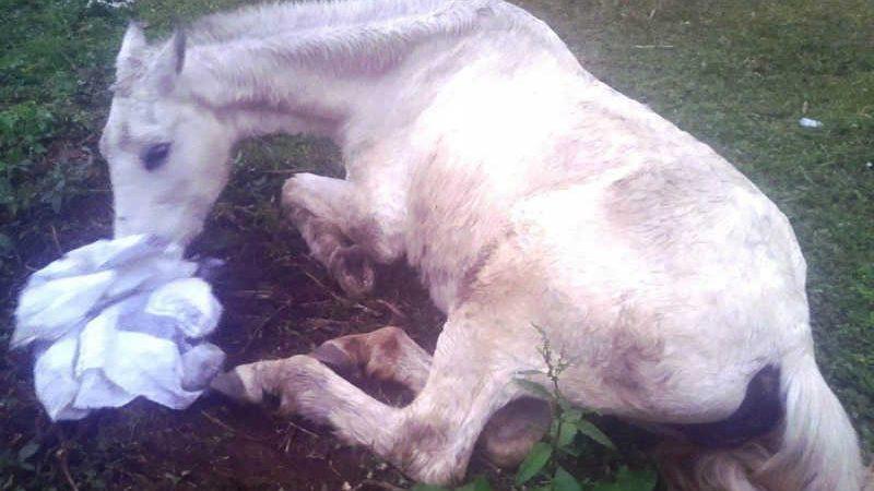 Égua extremamente debilitada e abandonada em Teresópolis (RJ) é resgatada