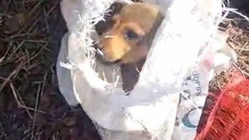 Cachorros são encontrados dentro de sacos de lixo em Três Rios — Foto: Reprodução/Redes Sociais