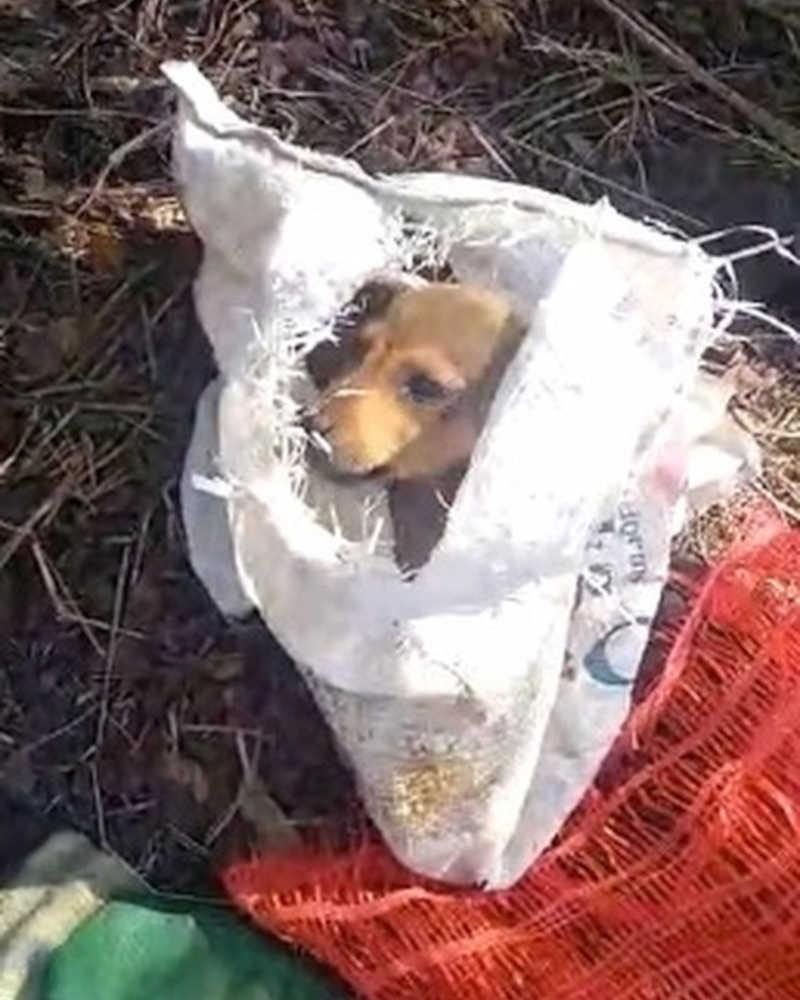 Cachorros são encontrados dentro de sacos de lixo em Três Rios, RJ