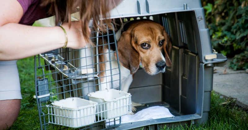 Em decisão histórica, objeção de consciência ao uso de animais é regulamentada na Universidade Federal Rural do RJ