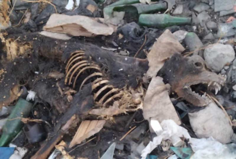 Carcaça de cães no lixão de Pau dos Ferros