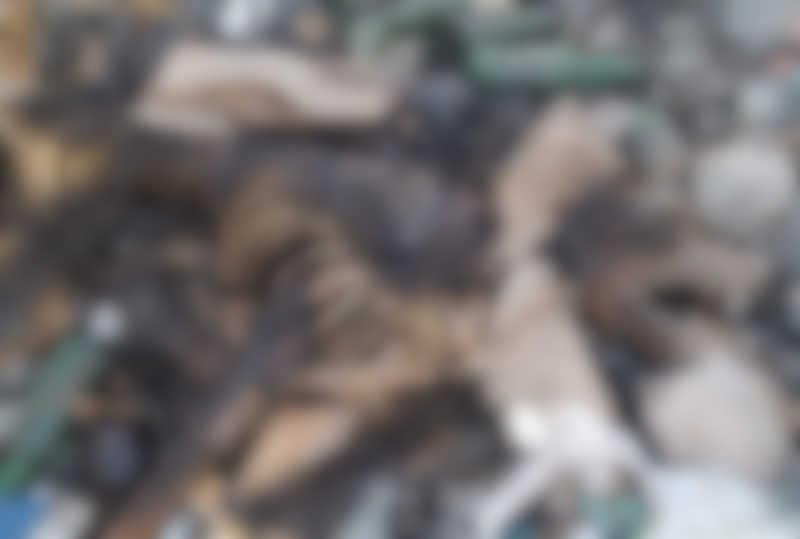 Agente denuncia que cães são 'eutanasiados' e jogados em lixão em Pau dos Ferros, RN; imagens fortes
