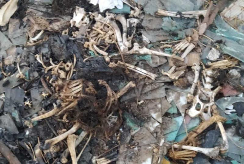 Carcaças de animais no lixão a céu aberto em Pau dos Ferros