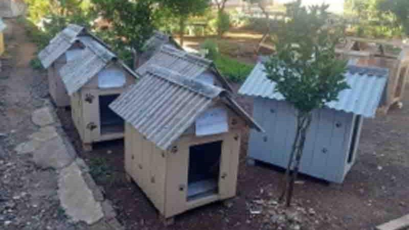 As casinhas são distribuídas entre famílias que sobrevivem em condições de vulnerabilidade, assim como seus animais. Foto de Susepe