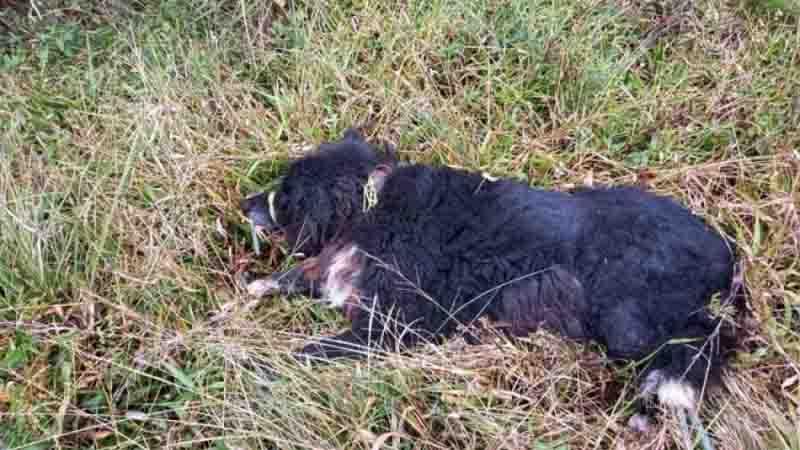 Bombeiros de Tapes resgatam cão vítima de maus-tratos e deixado para morrer. Foto: Divulgação
