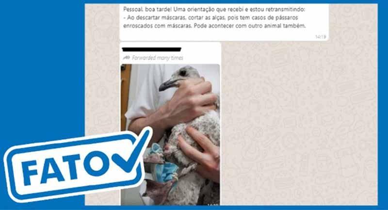 Animais se enroscam em lixo da pandemia ARTE R7
