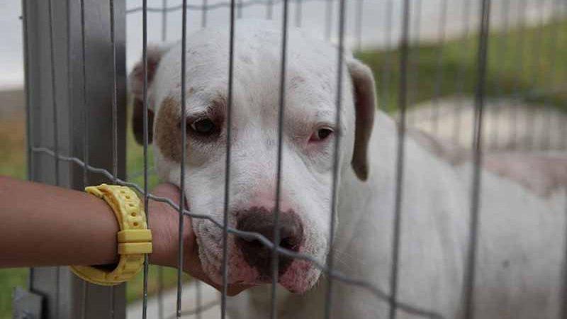 Animais podem ser vendidos em Santos após lei ser derrubada pelo TJ-SP — Foto: Divulgação/Prefeitura Municipal de Santos