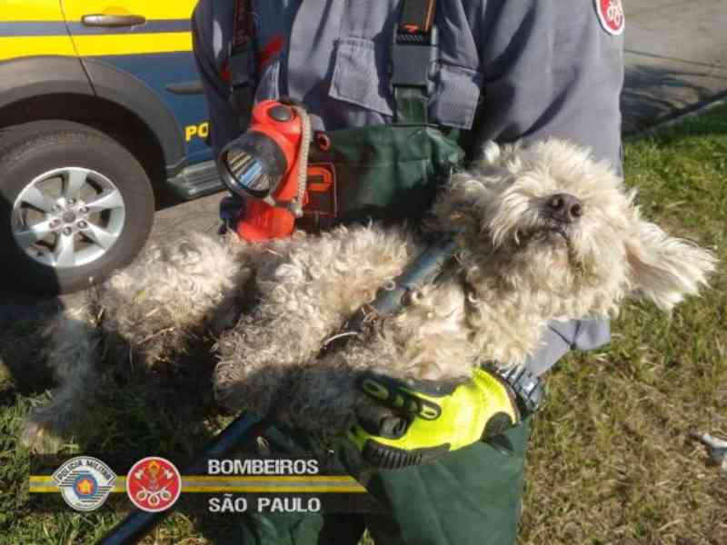 Cachorro é resgatado de bueiro após ter sido abandonado na Dutra, em Aparecida, SP