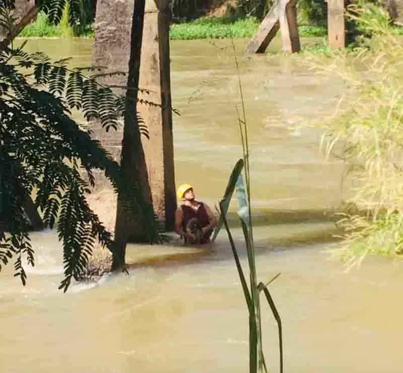 Cachorro é resgatado após ficar ilhado no Rio Paraíba em Lavrinhas, SP; VÍDEO