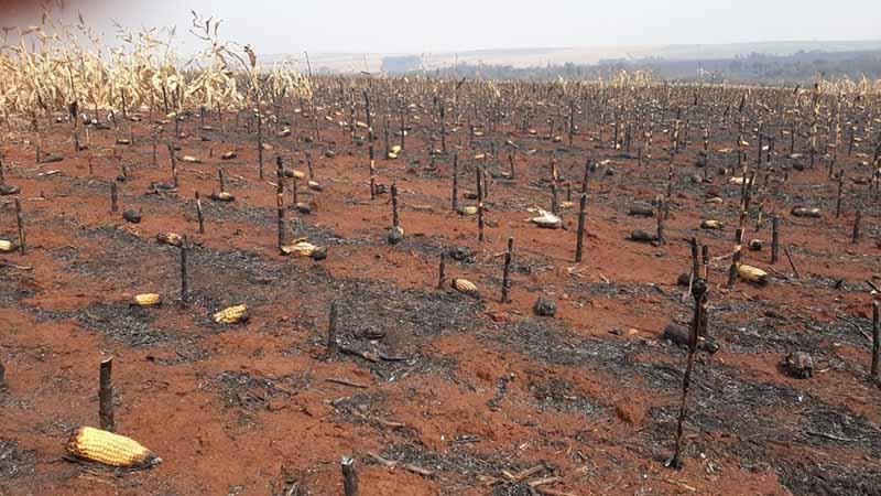 Incêndio em Palmital destruiu plantação de milho, cana de açúcar e área de vegetação permanente — Foto: Adolfo Lima/ TV TEM