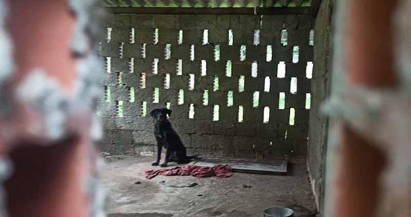 Mulher é investigada após PM Ambiental localizar cachorros com sinais de maus-tratos em Santos, SP