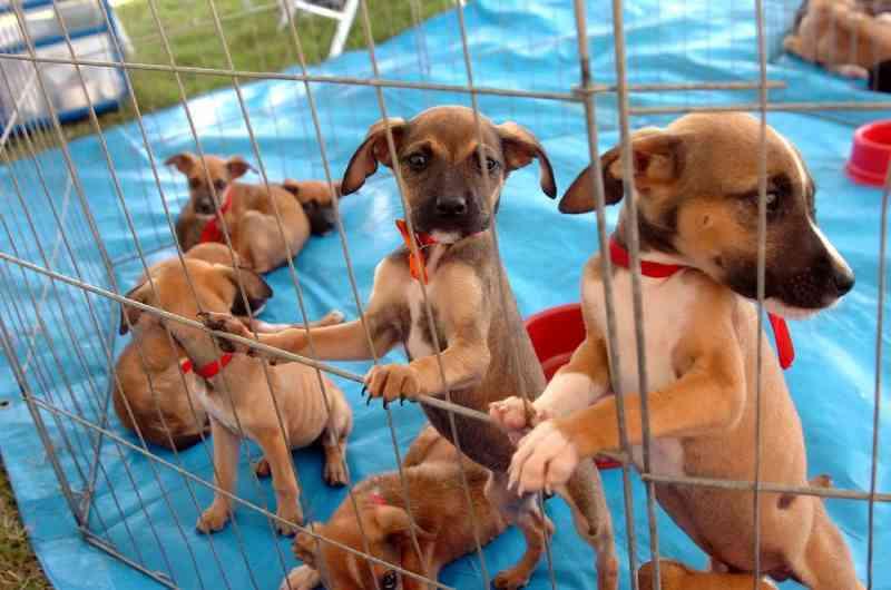 Câmara derruba veto ao PL que proíbe condenados por maus-tratos de adotar animais em Sorocaba, SP