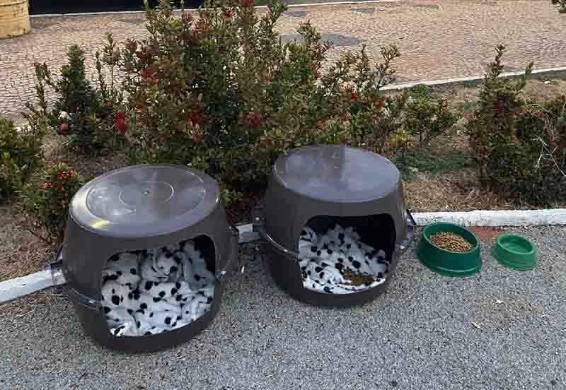 Estudante faz casinhas para cães e gatos de rua com baldes: 'Muito respeito pelos animais'
