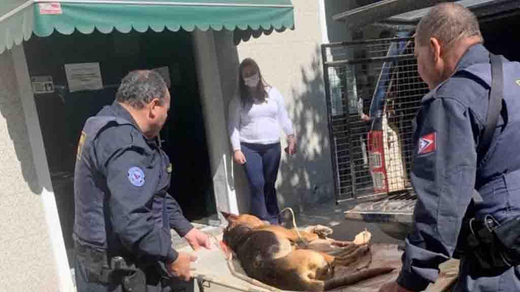 Pauladas: homem é preso após confessar ter matado cão em Amparo, SP