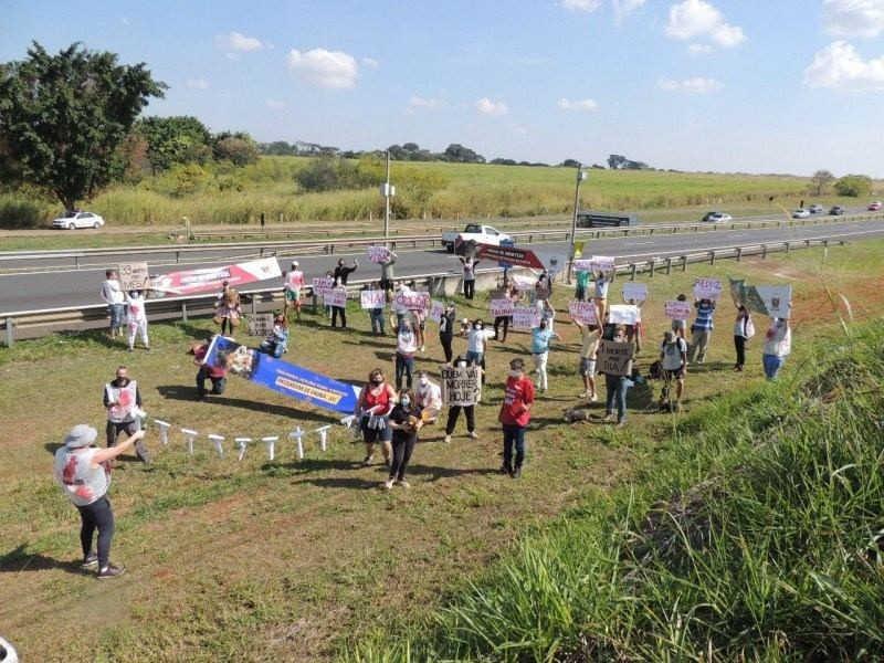 Grupo requer construção de passagem de fauna na SP-332, em Campinas, SP
