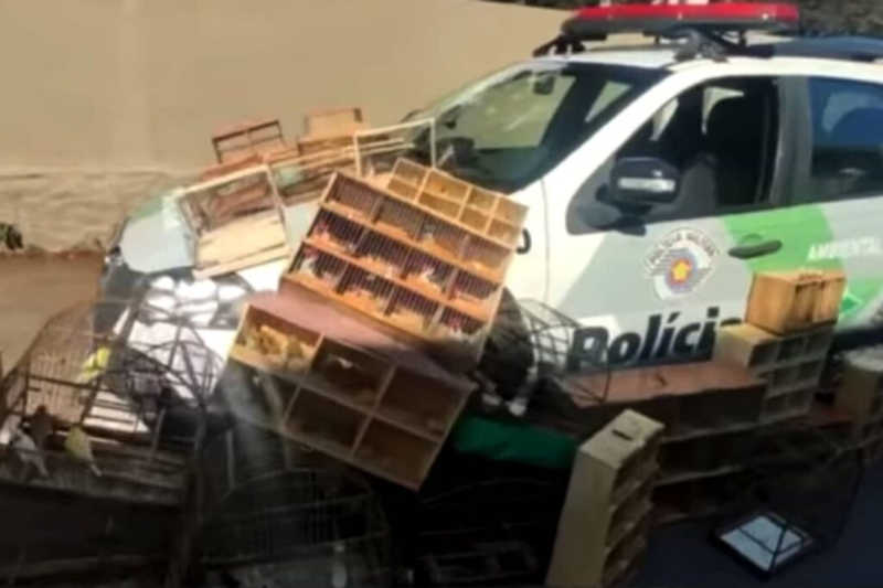 PM resgata 140 pássaros que seriam vendidos em feira do rolo em Osasco, SP