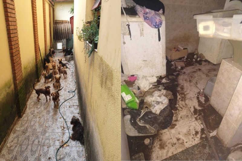 Homem é condenado por maus-tratos contra 25 cães que comiam restos de ração em meio a fezes no litoral de SP