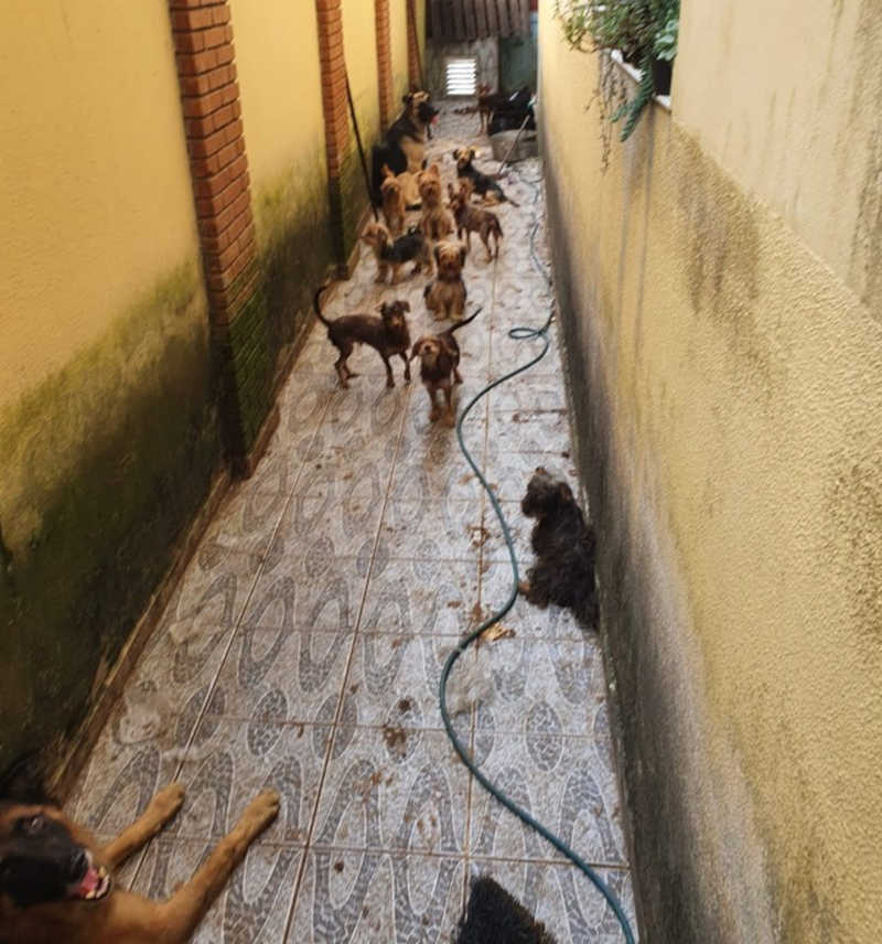 Mais de 20 cães viviam na residência em Peruíbe, SP — Foto: Reprodução