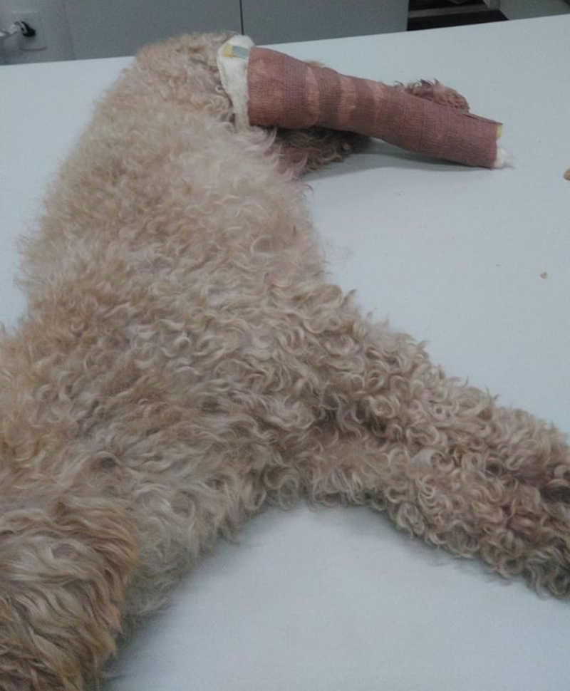 Animal ficou com três fraturas no corpo e polícia vai investigar caso — Foto: Arquivo Pessoal