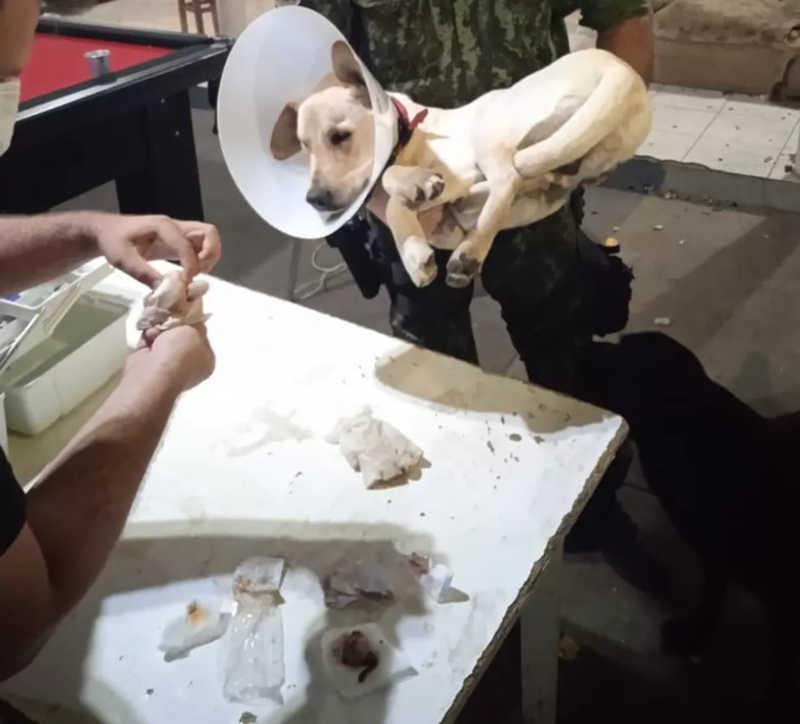 Após determinação judicial, universidade é obrigada a reintegrar alunos expulsos por envolvimento em castração irregular de cão em república